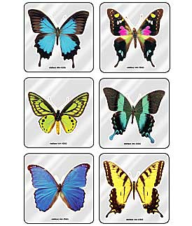 Butterfly Foil Asst. Stickers