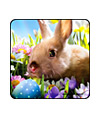 Cute Bunny Photos Asst. Stickers
